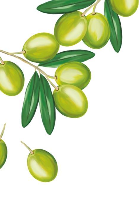 Une huile d'olive vierge extra Bio d'exception - Quintesens Bio